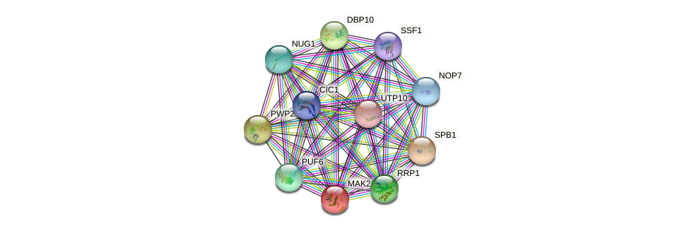 MAK21 protein (Saccharomyces cerevisiae) - STRING interaction network