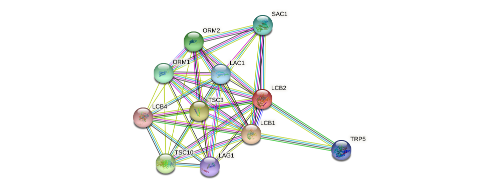 LCB2 protein (Saccharomyces cerevisiae) - STRING interaction network