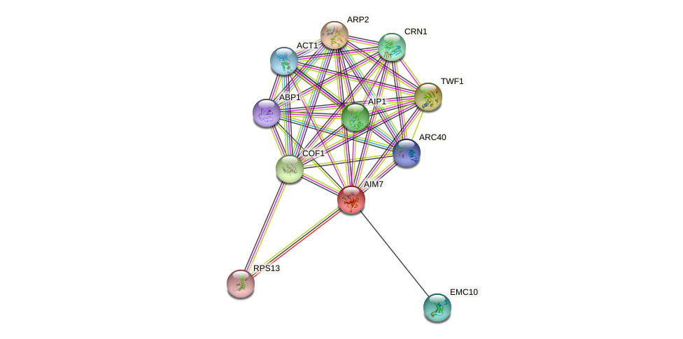 AIM7 protein (Saccharomyces cerevisiae) - STRING interaction network