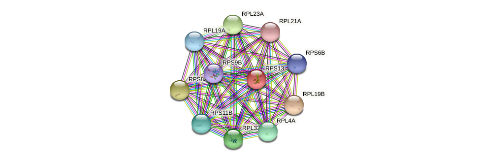 RPS13 protein (Saccharomyces cerevisiae) - STRING interaction network
