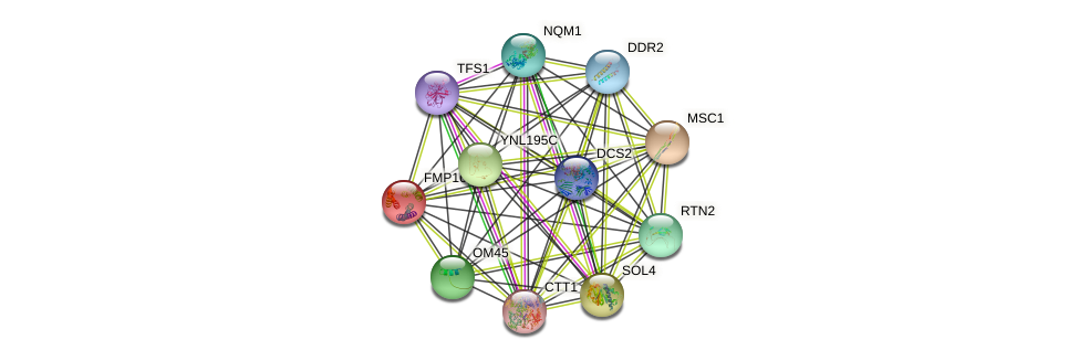 FMP16 protein (Saccharomyces cerevisiae) - STRING interaction network