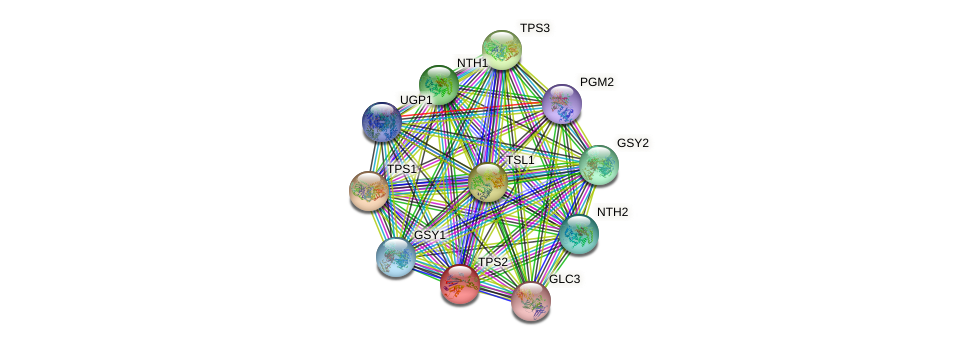 TPS2 protein (Saccharomyces cerevisiae) - STRING interaction network