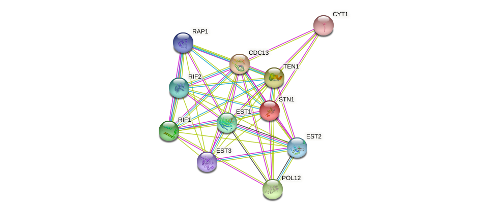 STN1 protein (Saccharomyces cerevisiae) - STRING interaction network
