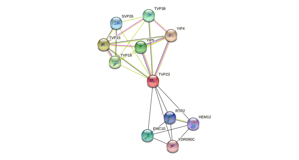 TVP23 protein (Saccharomyces cerevisiae) - STRING interaction network