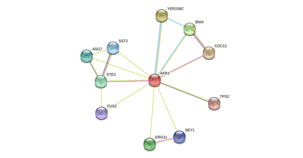 AFR1 protein (Saccharomyces cerevisiae) - STRING interaction network