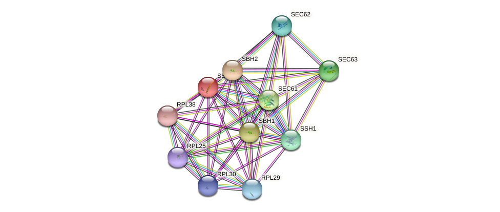 SSS1 protein (Saccharomyces cerevisiae) - STRING interaction network