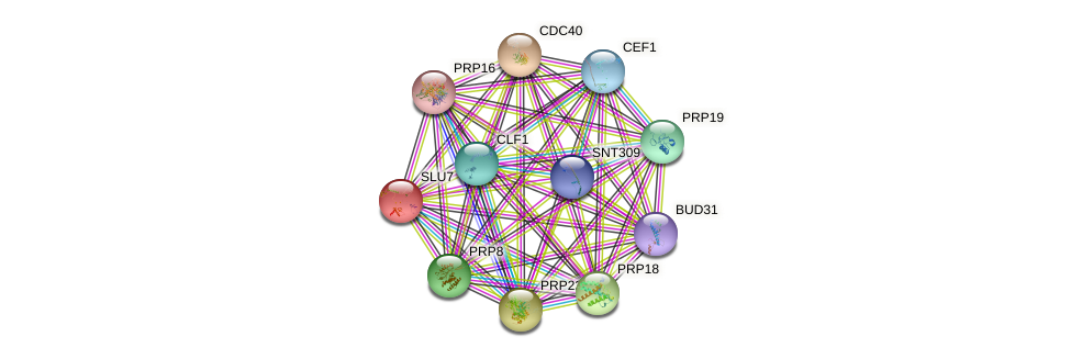 SLU7 protein (Saccharomyces cerevisiae) - STRING interaction network