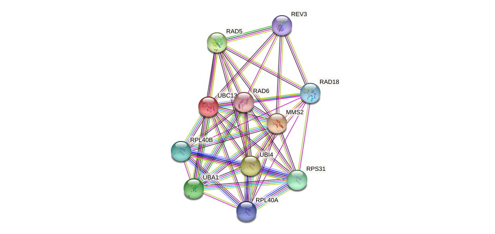 UBC13 protein (Saccharomyces cerevisiae) - STRING interaction network
