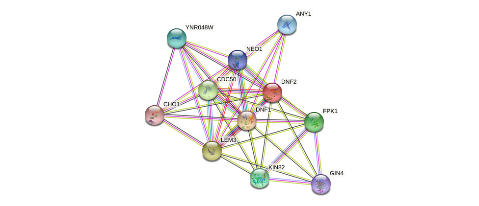DNF2 protein (Saccharomyces cerevisiae) - STRING interaction network