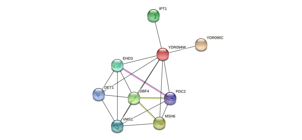 YDR094W protein (Saccharomyces cerevisiae) - STRING interaction network