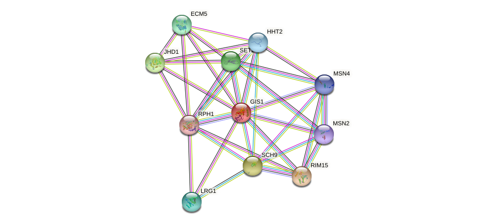 GIS1 protein (Saccharomyces cerevisiae) - STRING interaction network