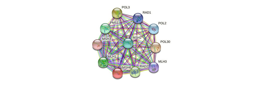 MSH6 protein (Saccharomyces cerevisiae) - STRING interaction network