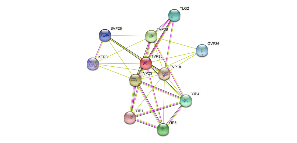 TVP15 protein (Saccharomyces cerevisiae) - STRING interaction network