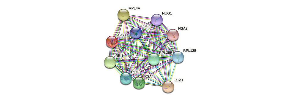 ARX1 protein (Saccharomyces cerevisiae) - STRING interaction network