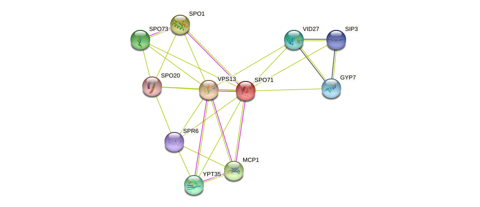 SPO71 protein (Saccharomyces cerevisiae) - STRING interaction network