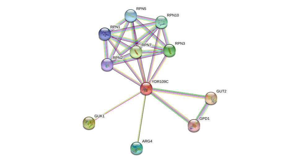 YDR109C protein (Saccharomyces cerevisiae) - STRING interaction network