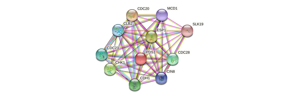 PDS1 protein (Saccharomyces cerevisiae) - STRING interaction network