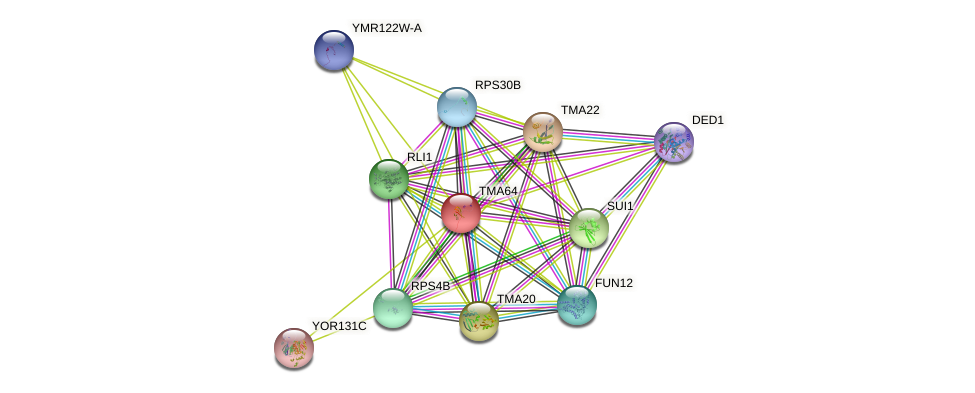 TMA64 protein (Saccharomyces cerevisiae) - STRING interaction network