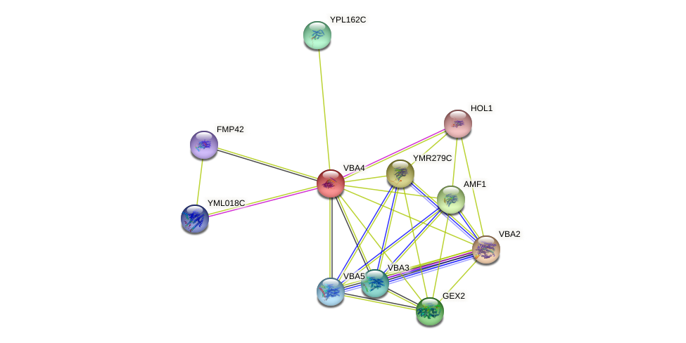 VBA4 protein (Saccharomyces cerevisiae) - STRING interaction network