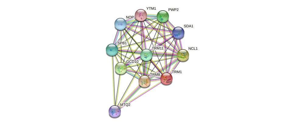 TRM1 protein (Saccharomyces cerevisiae) - STRING interaction network