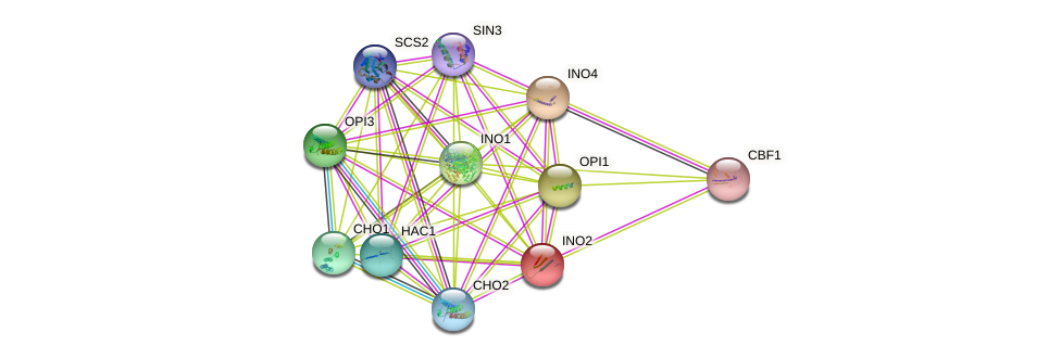 INO2 protein (Saccharomyces cerevisiae) - STRING interaction network