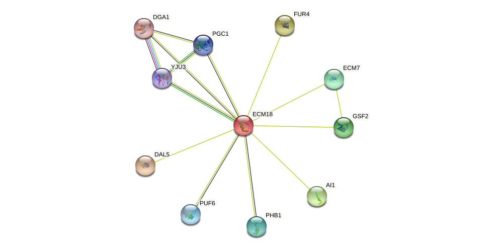 ECM18 protein (Saccharomyces cerevisiae) - STRING interaction network