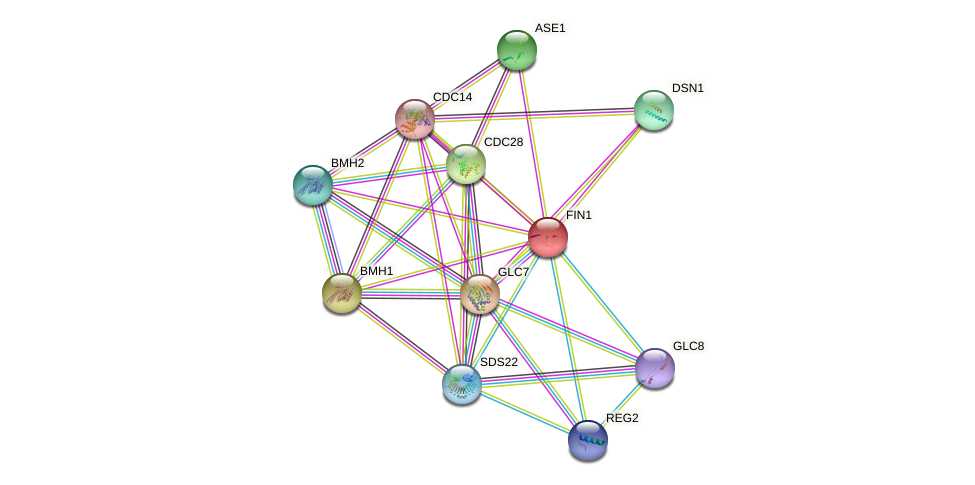 FIN1 protein (Saccharomyces cerevisiae) - STRING interaction network