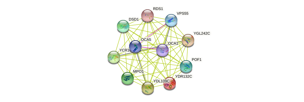 YDR132C protein (Saccharomyces cerevisiae) - STRING interaction network