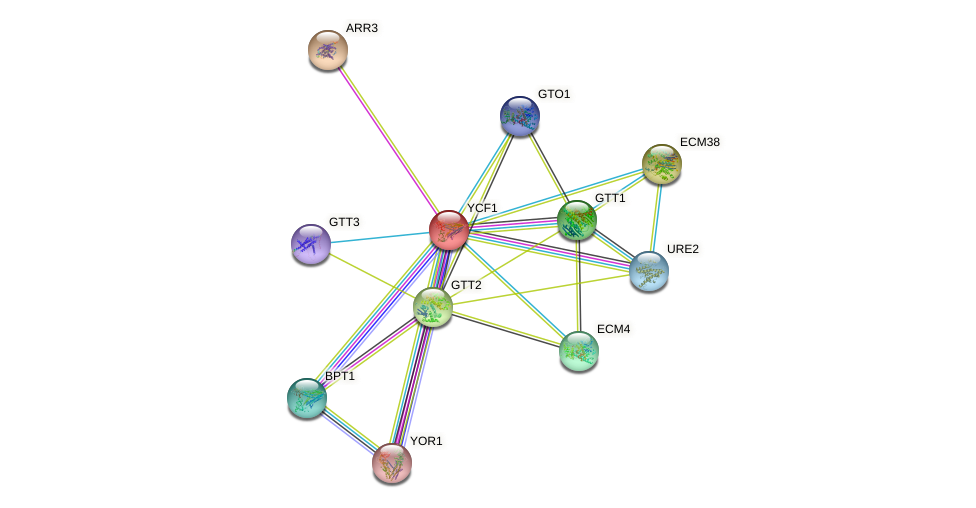 YCF1 protein (Saccharomyces cerevisiae) - STRING interaction network