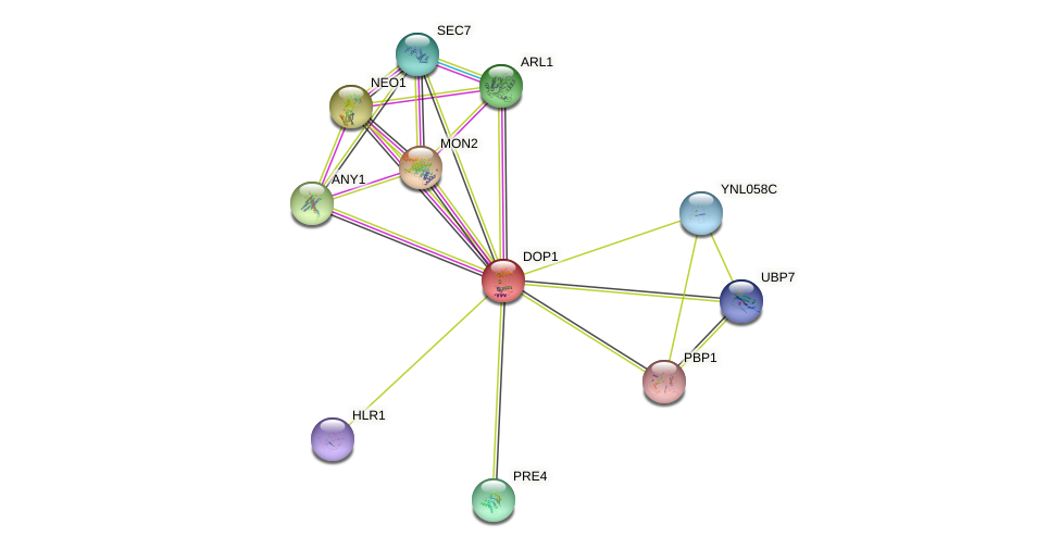 DOP1 protein (Saccharomyces cerevisiae) - STRING interaction network