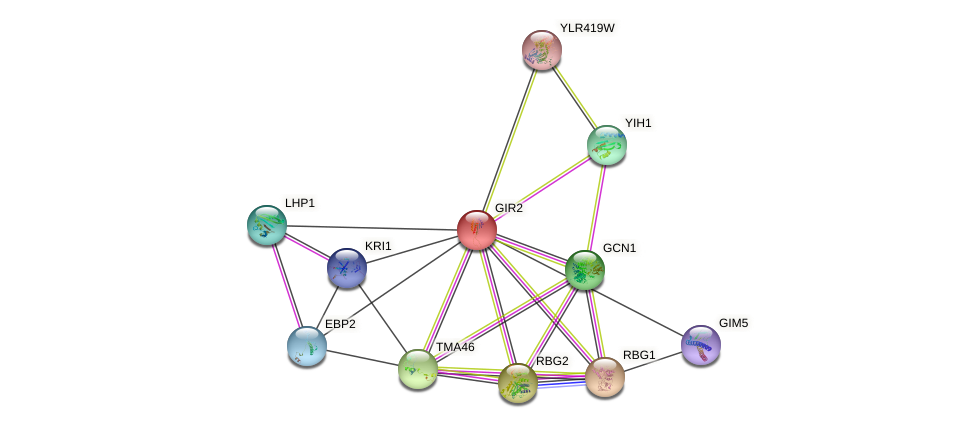 GIR2 protein (Saccharomyces cerevisiae) - STRING interaction network