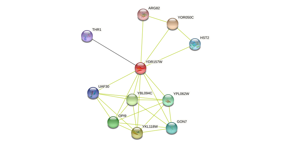 YDR157W protein (Saccharomyces cerevisiae) - STRING interaction network