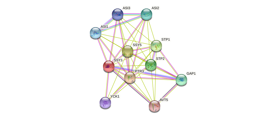 SSY1 protein (Saccharomyces cerevisiae) - STRING interaction network