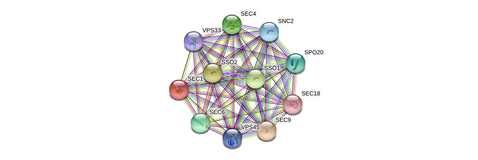 SEC1 protein (Saccharomyces cerevisiae) - STRING interaction network