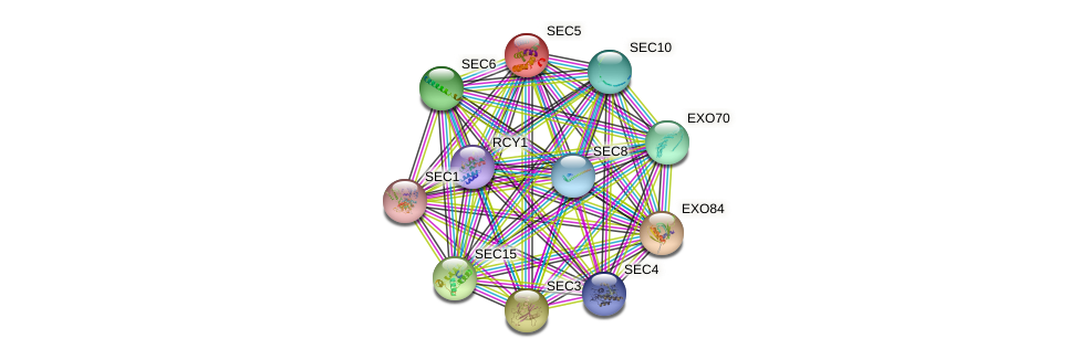 SEC5 protein (Saccharomyces cerevisiae) - STRING interaction network