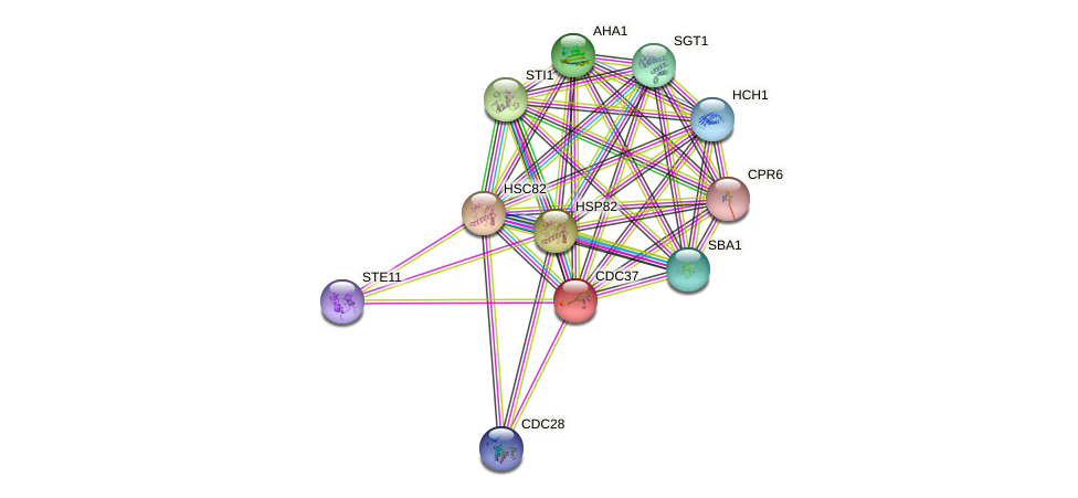 CDC37 protein (Saccharomyces cerevisiae) - STRING interaction network