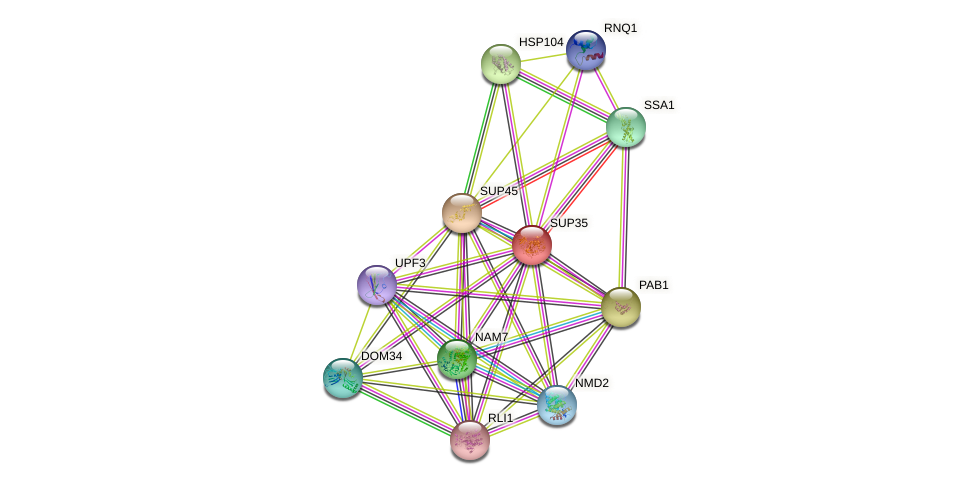 SUP35 protein (Saccharomyces cerevisiae) - STRING interaction network