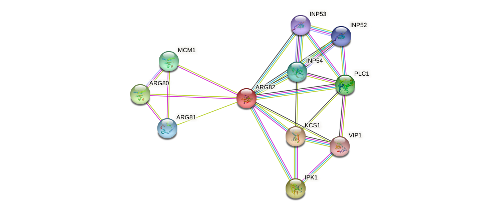 ARG82 protein (Saccharomyces cerevisiae) - STRING interaction network
