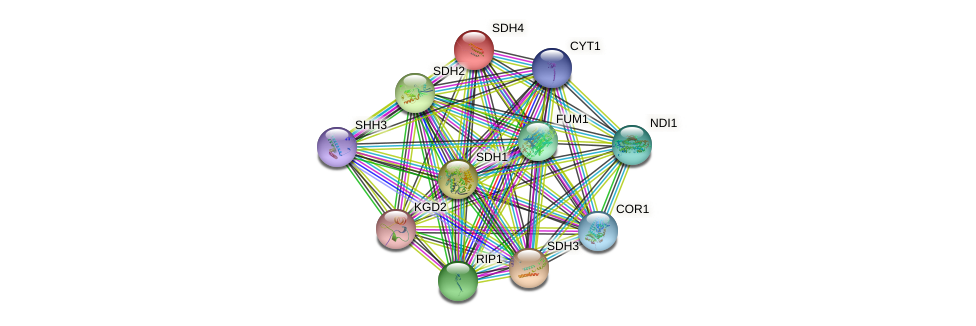 SDH4 protein (Saccharomyces cerevisiae) - STRING interaction network