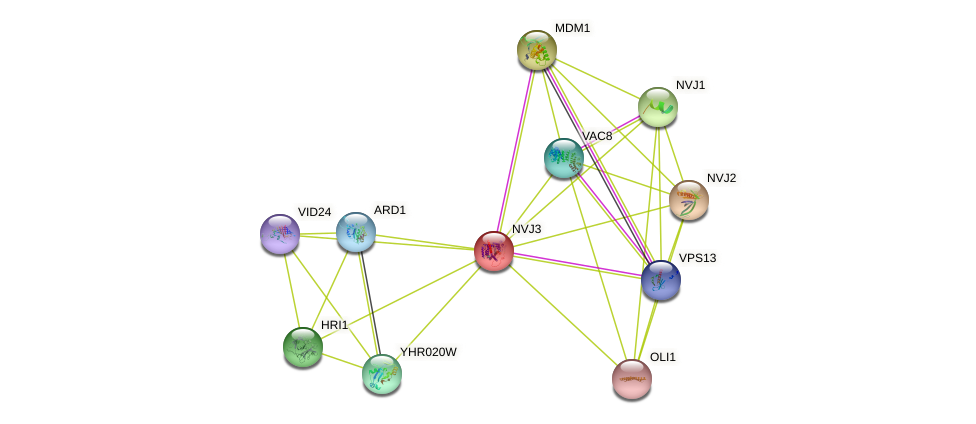 NVJ3 protein (Saccharomyces cerevisiae) - STRING interaction network