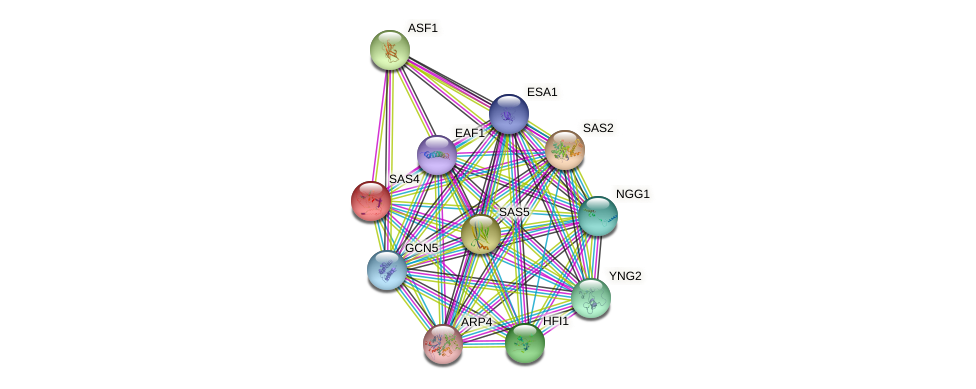 SAS4 protein (Saccharomyces cerevisiae) - STRING interaction network
