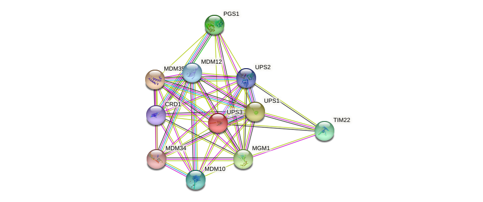 UPS3 protein (Saccharomyces cerevisiae) - STRING interaction network