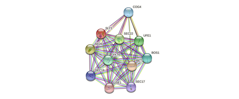 SLY1 protein (Saccharomyces cerevisiae) - STRING interaction network