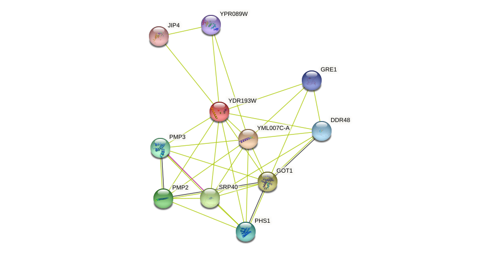YDR193W protein (Saccharomyces cerevisiae) - STRING interaction network