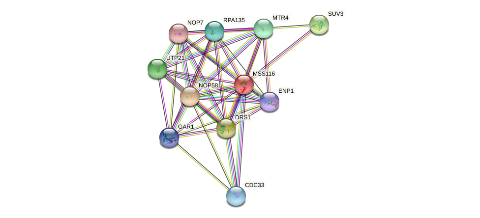MSS116 protein (Saccharomyces cerevisiae) - STRING interaction network