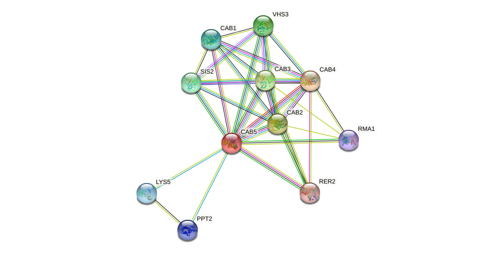 CAB5 protein (Saccharomyces cerevisiae) - STRING interaction network