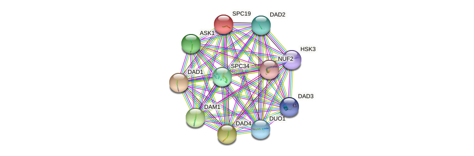 SPC19 protein (Saccharomyces cerevisiae) - STRING interaction network