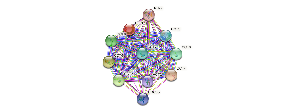 TCP1 protein (Saccharomyces cerevisiae) - STRING interaction network