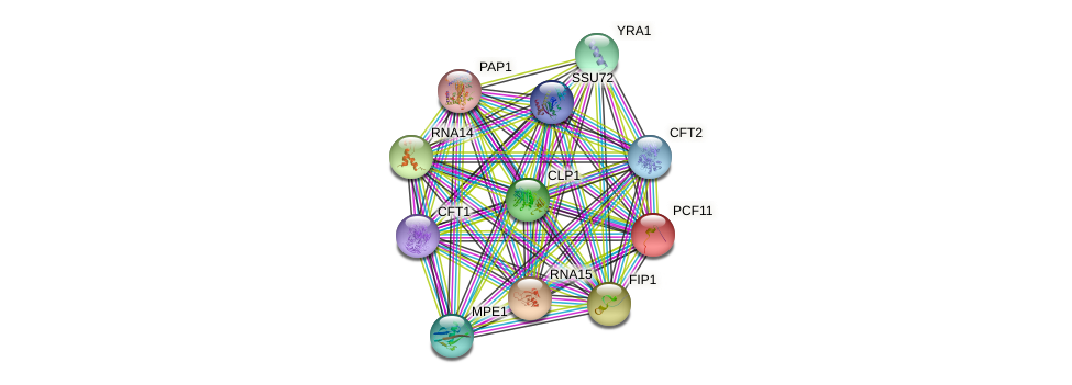 PCF11 protein (Saccharomyces cerevisiae) - STRING interaction network