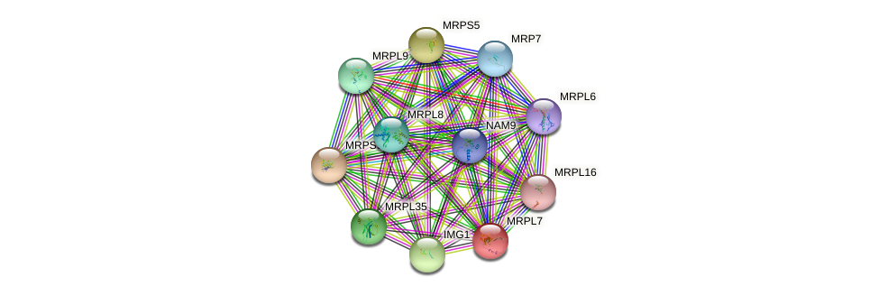 MRPL7 protein (Saccharomyces cerevisiae) - STRING interaction network